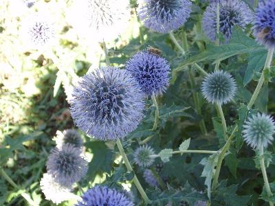 Bumblebeeflowerjpg