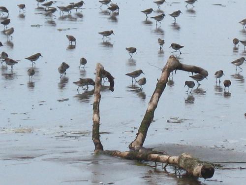 skitterbirds2.jpg