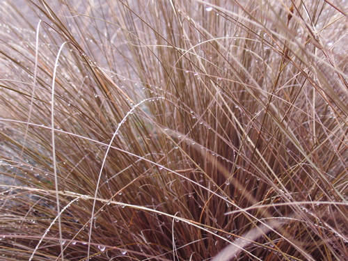 dewygrass.jpg