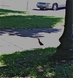strangelittlebird