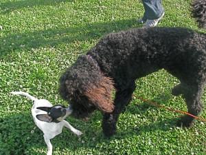 saturdayscooterandlittledog