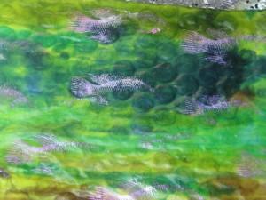 fishbubblewrapdyeing