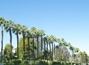 palmdesertpalms
