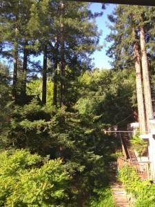 redwoodsfromdeck