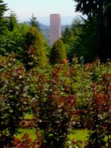 rosegardenbigpink