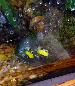 twinfrogs
