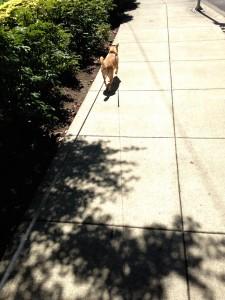wilfredodogwalk