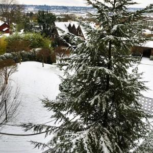 snowphoto