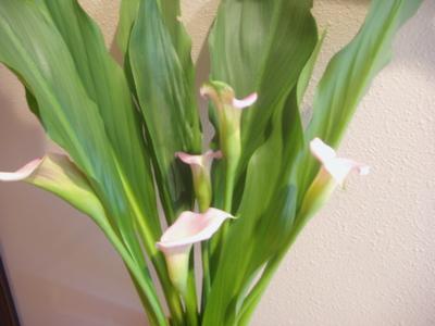 Gardenlilies