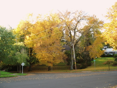 Yellowelms4