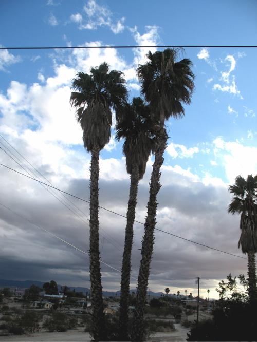 desertpalmtrees.jpg