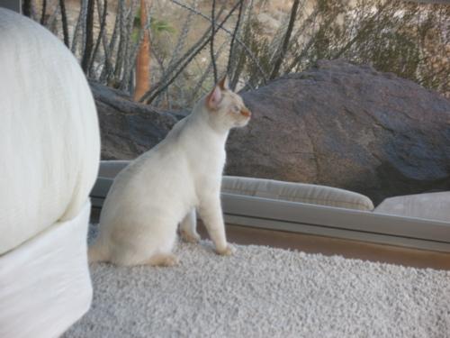 freycat2.jpg
