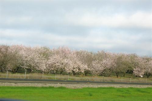 blossomprofusion.jpg