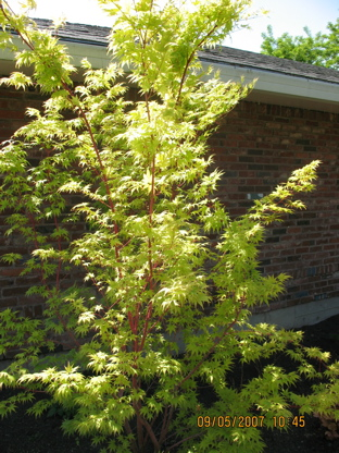 limegreentree2.jpg