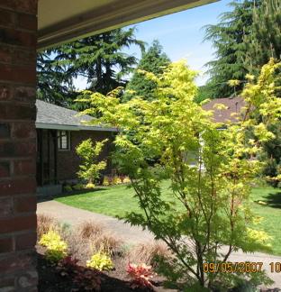 limegreentrees.jpg
