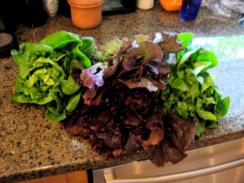 farmersmarketlettuce.jpg