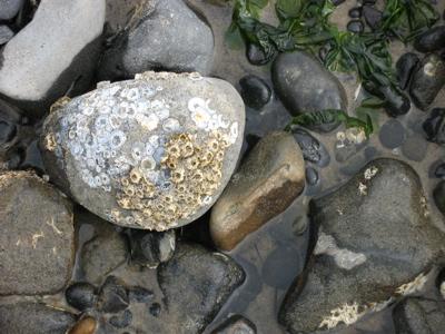 beachrocks.jpg
