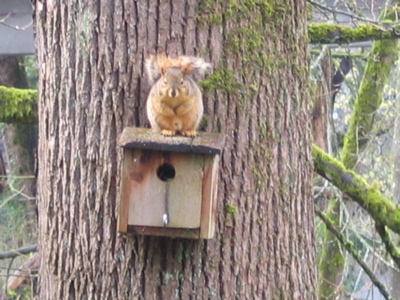 reedcanyonsquirrel.jpg