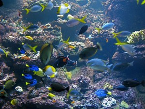 acofsctropicalfish2