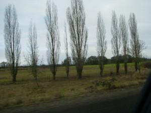 i5trees
