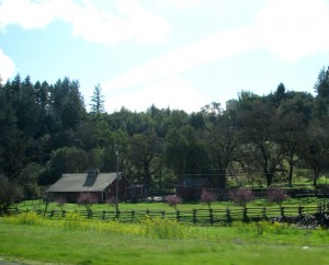 ruralsonoma