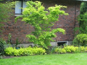 ourneighborhoodgreen