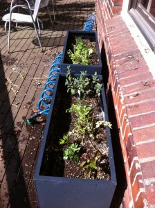 herbplanters