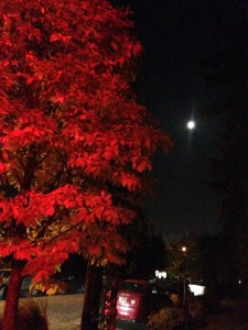 redtreewithmoon