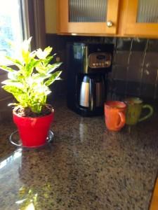 kitchencoffeestage