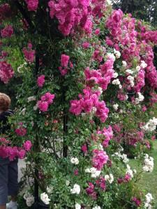 rosegarden1