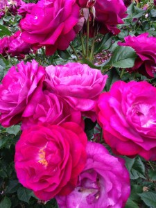 rosegarden4