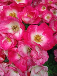 rosegarden9