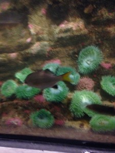 greenanenomes